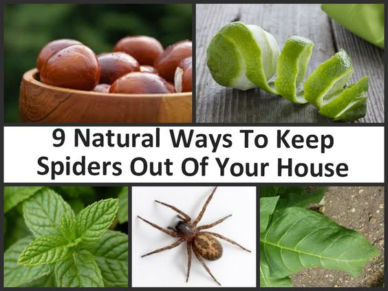 9 natural ways to keep spiders out of your home search for How to keep spiders out of your house