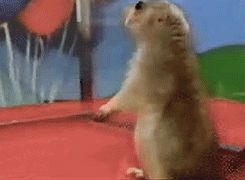 Overly dramatic chipmunk | Reaction gifs | Pinterest ...