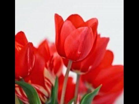 Cara Membuat Bunga Tulip Dari Sedotan Kerajinan Tangan Dari
