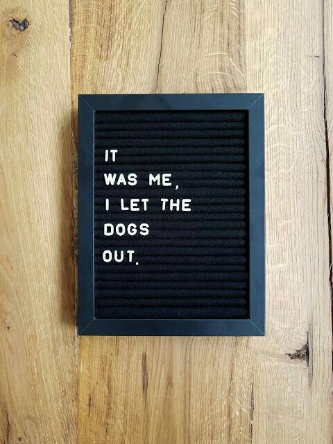 it was me / i let the dogs out