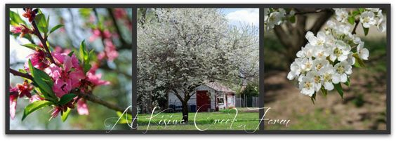 .Lilac Lane Cottage: cottage