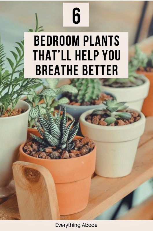6 Bedroom Plants That Ll Drastically Improve Your Health And Wellness Everything Abode In 2020 Bedroom Plants Small Indoor Plants Plants
