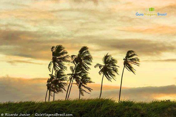 Fotos da Praia de Camurupim
