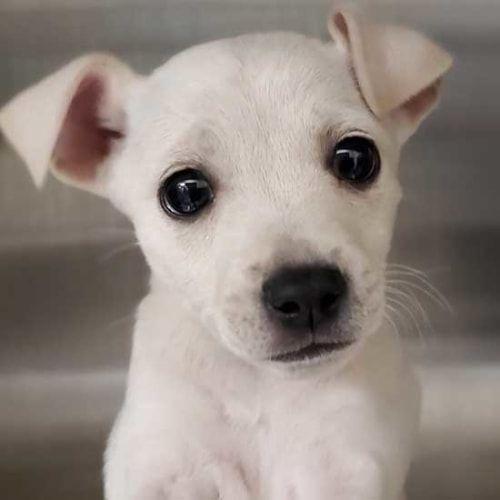 Pin On Pet Adoption