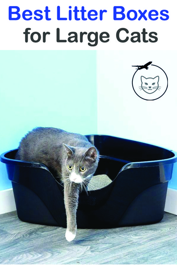 Best Litter Boxes For Large Cats With Images Best Litter Box Large Cats Litter Box