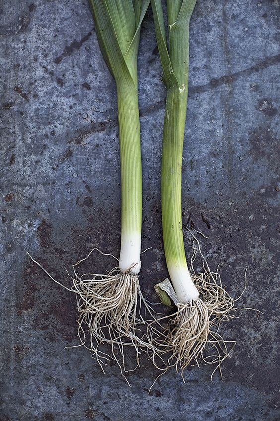 Leek - Swedish web shop: http://biancabrandoncox.com/art-prints  International web shop: https://society6.com/bianca_brandon_cox Now 10% off if you are signing in with your email adress.: