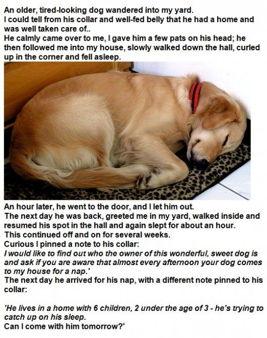 Sleepy Dog. Can't find the original source of this, but it is hilarious.