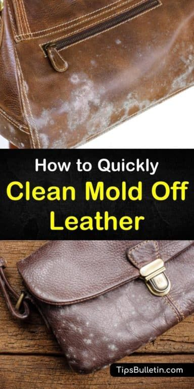 4 Simple Ways To Clean Mold Off Leather Clean Leather Purse Cleaning Hacks Mold Remover