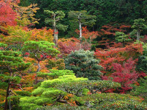 Kyoto, Japan - autumn leaves