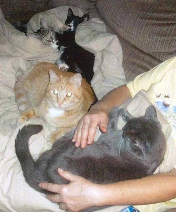 Kitties & me