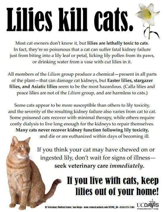 Pin By Phyllis Bates On Pet Info In 2020 Cat Care Tips Cat Care Pet Safety