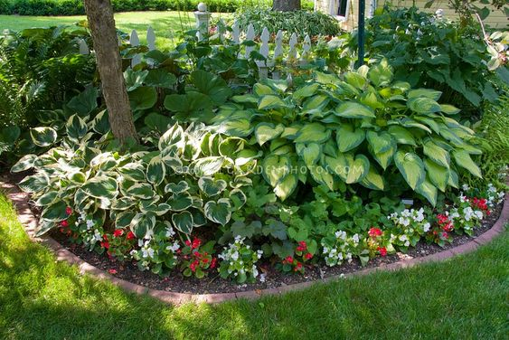 nice little shade garden