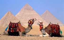 WALLPAPERS HD: Egypt Cairo Camels