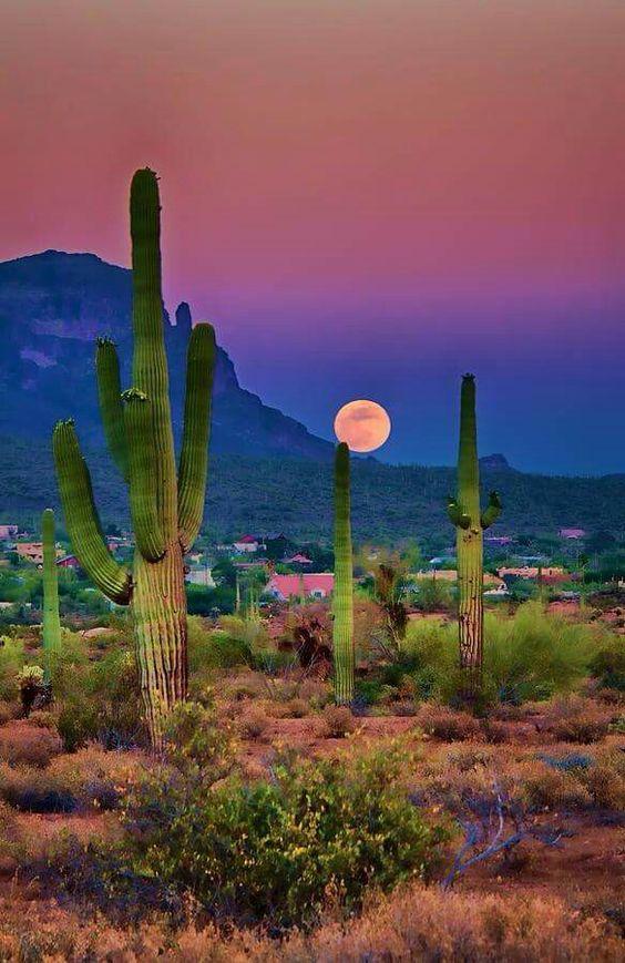 Arizona desert. Photo credit Arizona Hills Magazine: