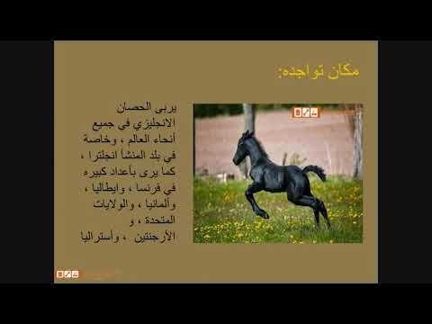 بيتس جوت ويب لشراء وبيع الحيوانات الاليفة تقدم لكم مواصفات الحصان الانجل Sayings Pandora Screenshot