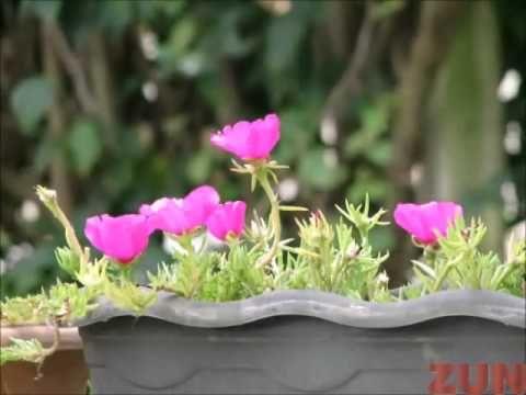 Flores Que Gostam De Muito Sol Flores Onze Horas E