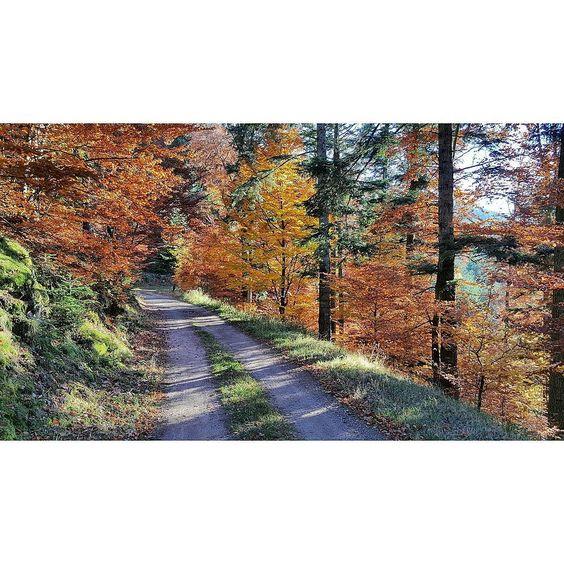 """68bricevrb: """"Ballade dans les hauteurs  Automne 2015  #france #alsace #iger #photooftheday #picoftheday #landscape #paysage #nature #automne #forêt #colorful #life #natur"""""""