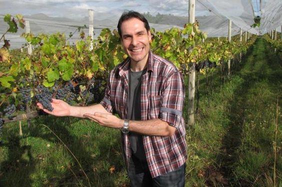Colunista participa da primeira festa da colheita da uva em SC e conta experiência