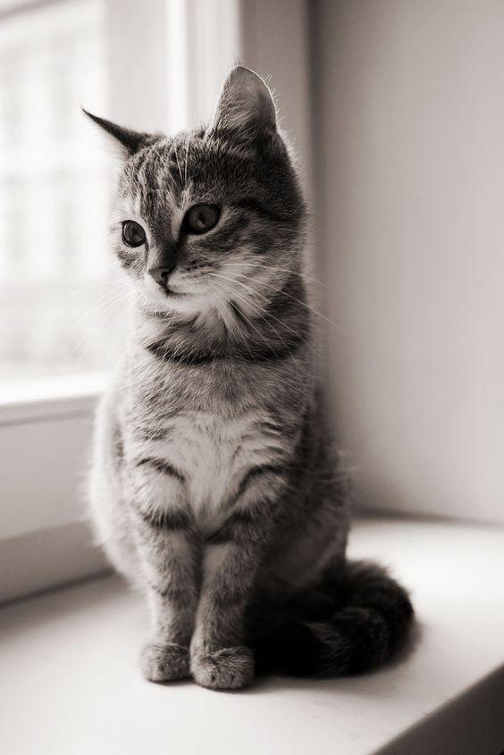 Cutie:
