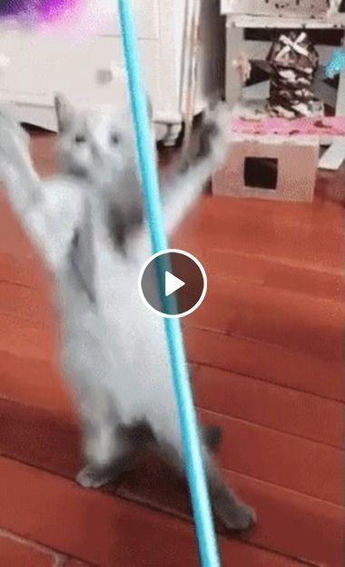 Gatinho não aguenta pula no espanador.