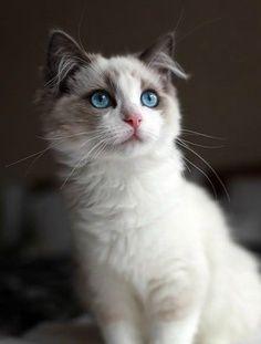 M Cat Names Beautiful, Cat ...