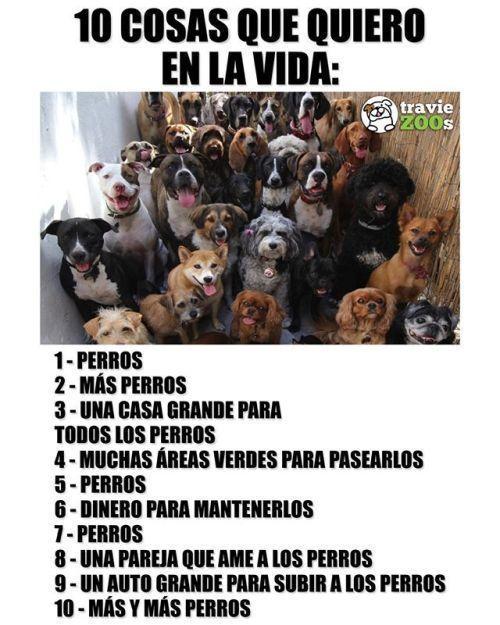 Exacto D Exacto D Exacto Perrosbonitos Perrosgraciosos Perrosmascotas In 2020 Funny Animal Memes Dog Love Memes