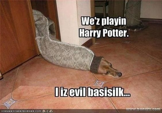 100 Harry Potter Memes That Will Always Make You Laugh Harry Potter Memes Harry Potter Wiki Harry Potter Cast