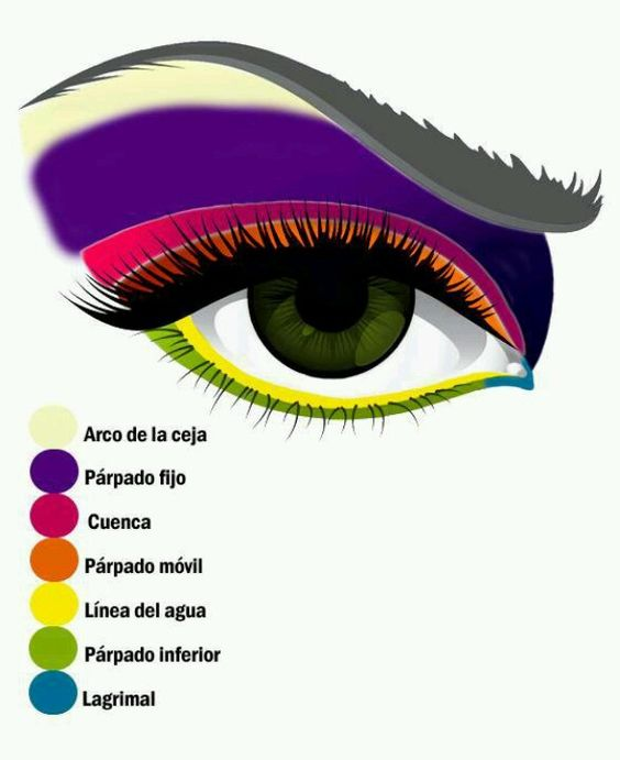 Identifiquemos las partes del ojo