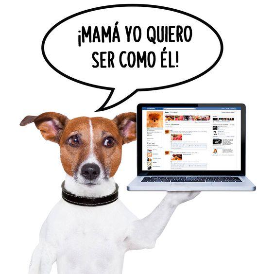 """""""Que tu mascota tenga su propio Facebook e Instagram es la sensación.   Prueba de ello es #Boo un hermoso  perrito Pomerania que es todo un éxito en las redes sociales. #Perros #Dog #Instagram #Facebook visita sus redes sociales https://www.facebook.com/Boo  @buddyboowaggytails o @iamboo_officialfanpage"""""""