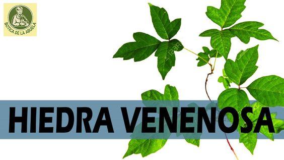 Hiedra venenosa – Remedios Naturales y caseros
