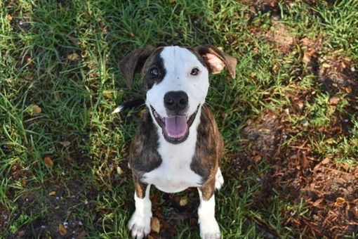 Panama City Fl Hound Unknown Type Meet Mack A Pet For