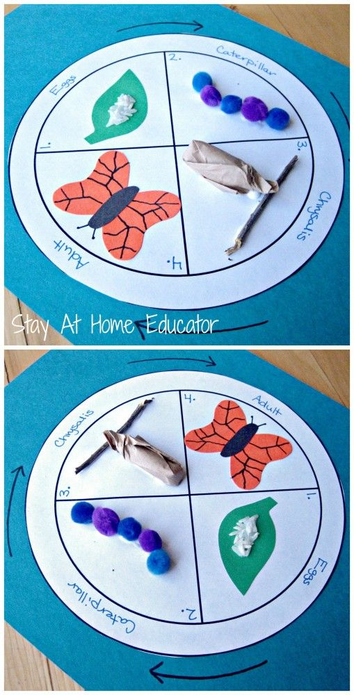 3D life cycle of a butterfly craft - Stay At Home Educator