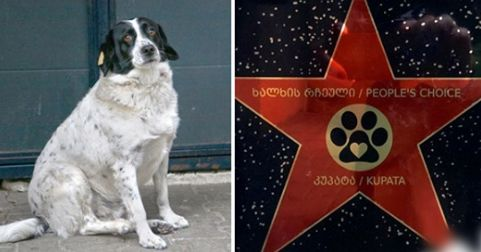 Stray Dog Named Sausage Gets Appreciation Star For Helping Kindergartners Cross The Road In 2020 Dog Names Dogs Dog House