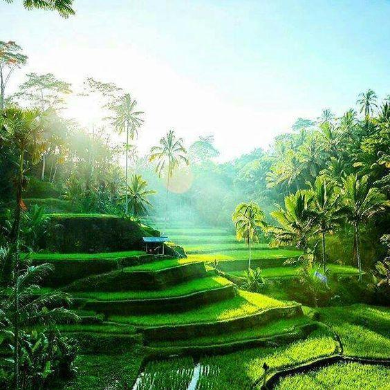 Ceking rice terraces tegalalang bali island indonesia for Terrace ubud bali