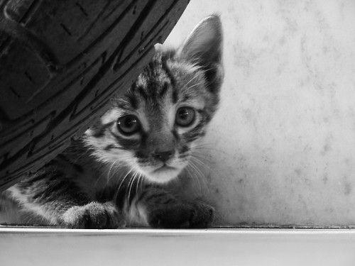 Hi sweetie! <3
