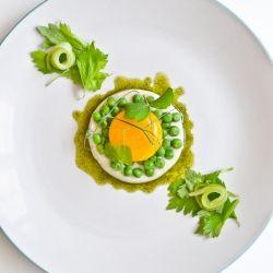 Celeriac Panna Cotta, Slow Poached Egg Yolk, Peas, Pickled Celery & Celery Leaves