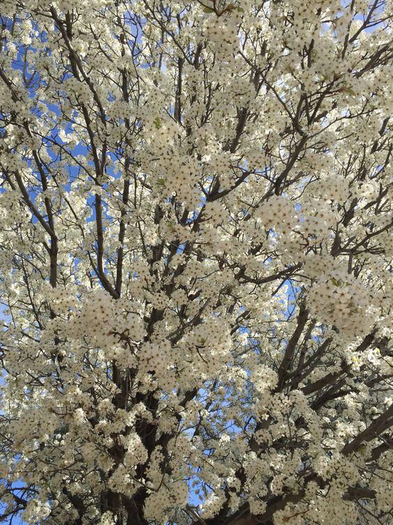 Springtime blooms, Northern Arizona