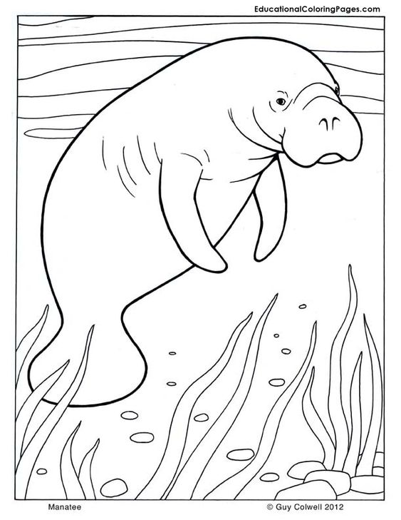 manatee coloring pages Manatee Activity Workbook zentangle