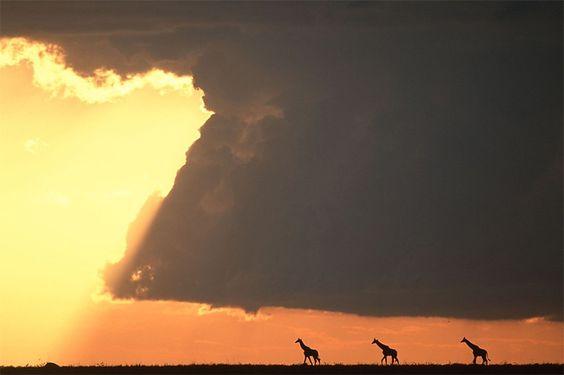 828 Fantásticas Puestas de sol en el Masai Mara
