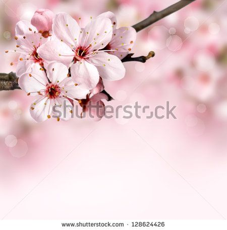 Spring border background with pink blossom