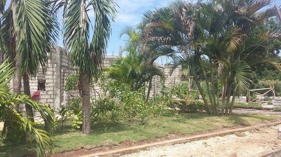 Der Pflanzenbottich am zukünftigen Pool ist nun auch komplett bepflanzt und hat auch den Rasen fertig
