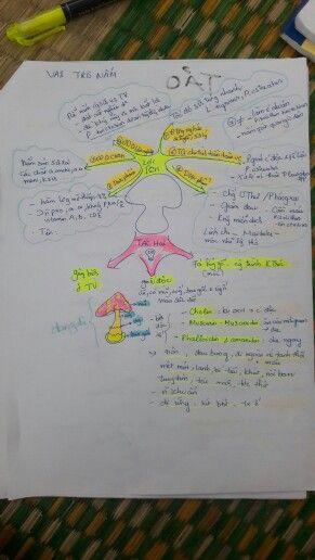 Ôn tập Nấm học. Vai trò của Nấm