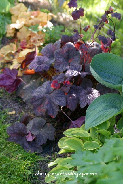 Ein Schweizer Garten: Buchsbaumpilz, ein möglicher Ersatz, wie man Heuchera-Stecklinge gewinnt und an welchem Workshop ich war