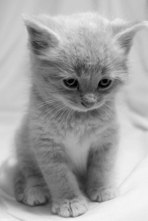 Get This Kittens For Sale Near Me Facebook View Kittens Cutest Cute Cats Cute Animals