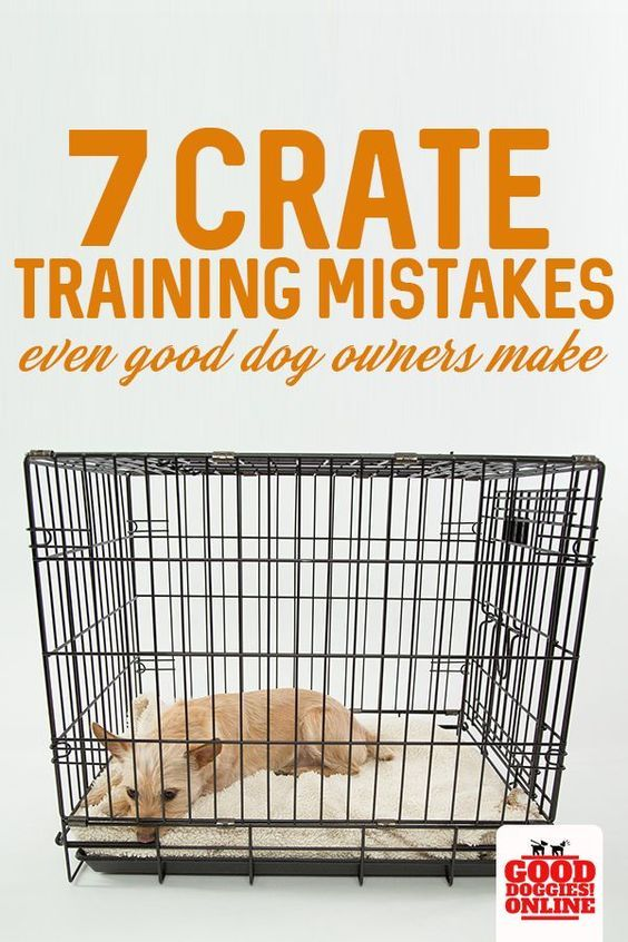 7 Mistakes When Crate Training A Dog That You Should Avoid Puppy