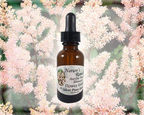 Astilbe Peach Blossom Flower Essence Nature S Remedies Flower Essences Peach Blossom Flower Holistic Health Remedies