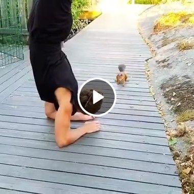 Como alimentar um esquilo vergonhoso no quintal de casa