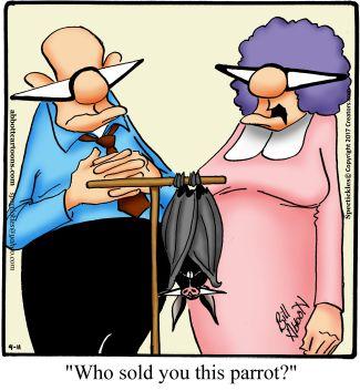 """Spectickles"" Cartoon A Day - Ornithological Oversight - Bill Abbott Cartoons:"