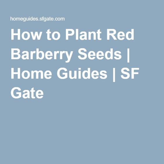 How to Plant Red Barberry Seeds | Home Guides | SF Gate