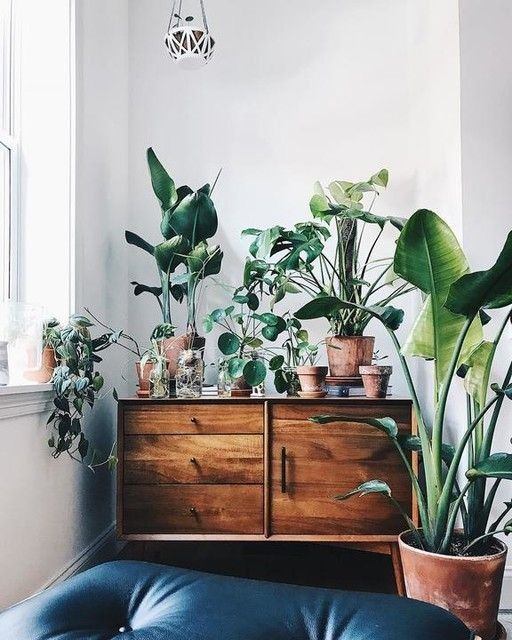 Indoor Plants Decor Ideas